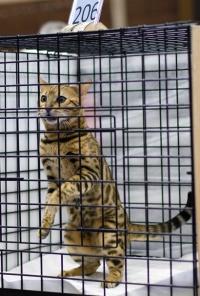 photo 106170 . Achilles Uxmal Maya Gold [BEN n 24] . 2008-09-27