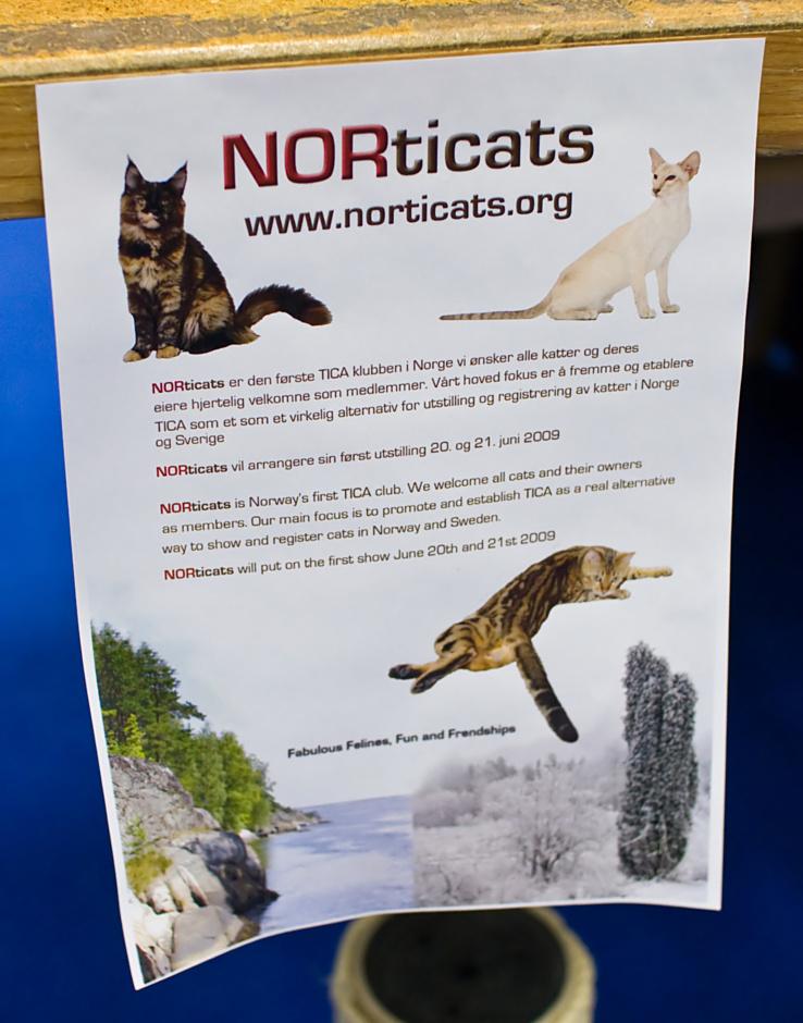 NORticats, photo 106214, 2008-09-27