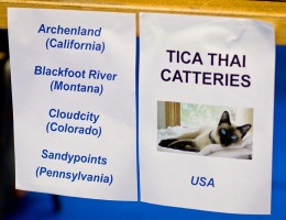 photo 107017 . TICA Thai Catteries USA: Archenland (California), Blackfoot River (Montana), Cloudcity (Colorado), Sandypoints (Pennsylvania) . 2008-09-28