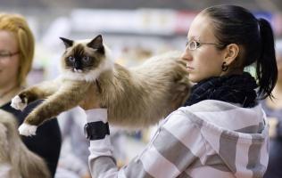 photo 108259 . Cat's-JM Netta-Nelli [RAG n 04] . 2008-10-04