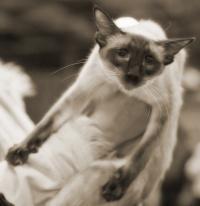 photo 111002 . Fercatin Viviyön Isabella (Nala) [BAL n] . 2008-11-01