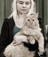 kuva 111143 . PR Kalicalanin Halti Tuiskupää (Alexander) [NFO d] . 1.11.2008