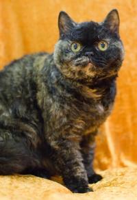photo 113019 . B3's Curly Kiara [SRS f] . 2008-11-16