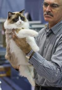 photo 116079 . Cat's-JM Nip-Nap [RAG n 03] . 2008-12-13