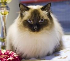 photo 117007 . Cat's-JM Nero-San [RAG n] . 2008-12-14