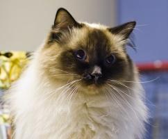photo 117008 . Cat's-JM Nero-San [RAG n] . 2008-12-14