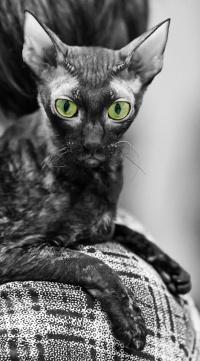 photo 118207 . IC Windseeker Rozy Black Pearl (Amelie) [CRX f] . 2009-01-24