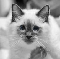 kuva 118020 . Cat's-JM Ar-Mani [RAG a] . 24.1.2009