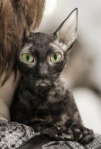 photo 118076 . IC Windseeker Rozy Black Pearl (Amelie) [CRX f] . 2009-01-24