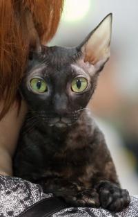 photo 118077 . IC Windseeker Rozy Black Pearl (Amelie) [CRX f] . 2009-01-24
