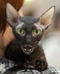photo 118078 . IC Windseeker Rozy Black Pearl (Amelie) [CRX f] . 2009-01-24