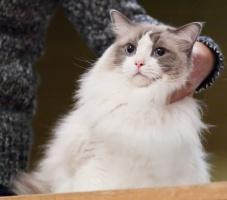 kuva 119113 . Stardoll's Furry Fellow (Masi) [RAG a 03] . 1.2.2009