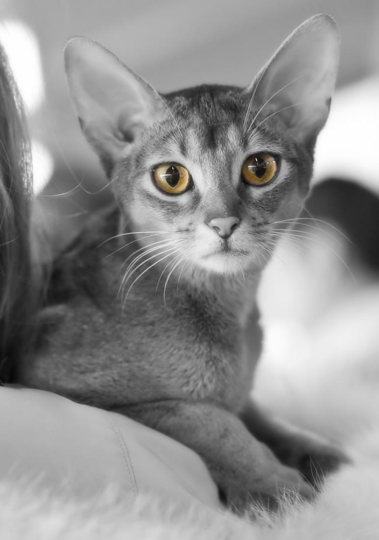 O'Marmalade Frejja [ABY n], photo 120183, 2009-03-14