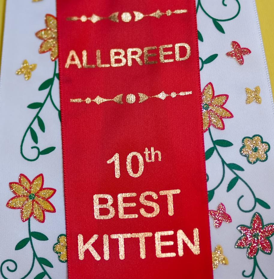 allbreed 10th best kitten, kuva 121023, 21.3.2009