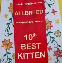 kuva 121023 . allbreed 10th best kitten . 21.3.2009