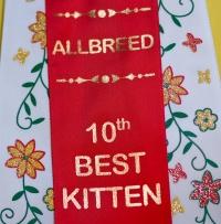 photo 121023 . allbreed 10th best kitten . 2009-03-21