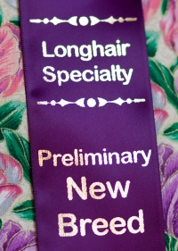 kuva 121024 . longhair speciality: preliminary new breed . 21.3.2009