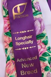 kuva 121030 . FINTICAt, longhair speciality: advanced new breed . 21.3.2009