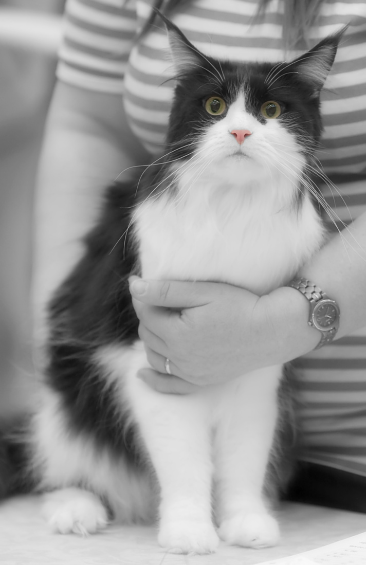 IP,IC Chamberlain Call Of T'Wind (Evy) [MCO n 03], kuva 122041, 28.3.2009