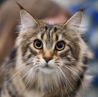 kuva 123018 . Escape's Jaya the Cat [MCO n 22] . 4.4.2009