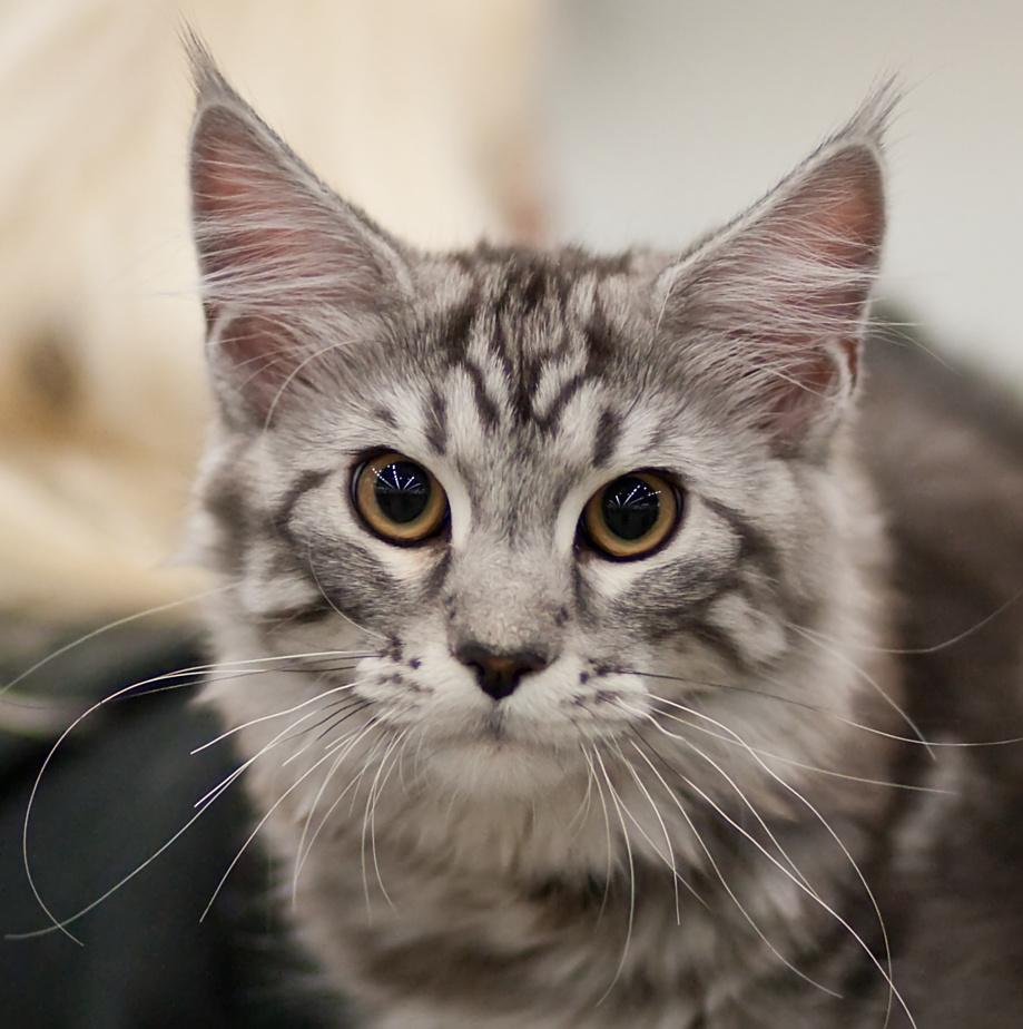 Rotcat Cat [MCO ns 22], kuva 123020, 4.4.2009