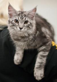 kuva 123021 . Rotcat Cat [MCO ns 22] . 4.4.2009