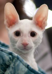 photo 123054 . VippeCat Baby Snowman [CRX w 61] . 2009-04-04