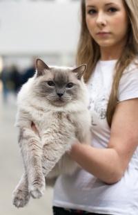 kuva 123094 . Cat's-JM Tähti-Tassu [RAG a] . 4.4.2009