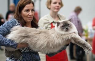 kuva 123100 . Cat's-JM Tähti-Tassu [RAG a] . 4.4.2009