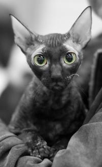 photo 123138 . IC Windseeker Rozy Black Pearl (Amelie) [CRX f] . 2009-04-04