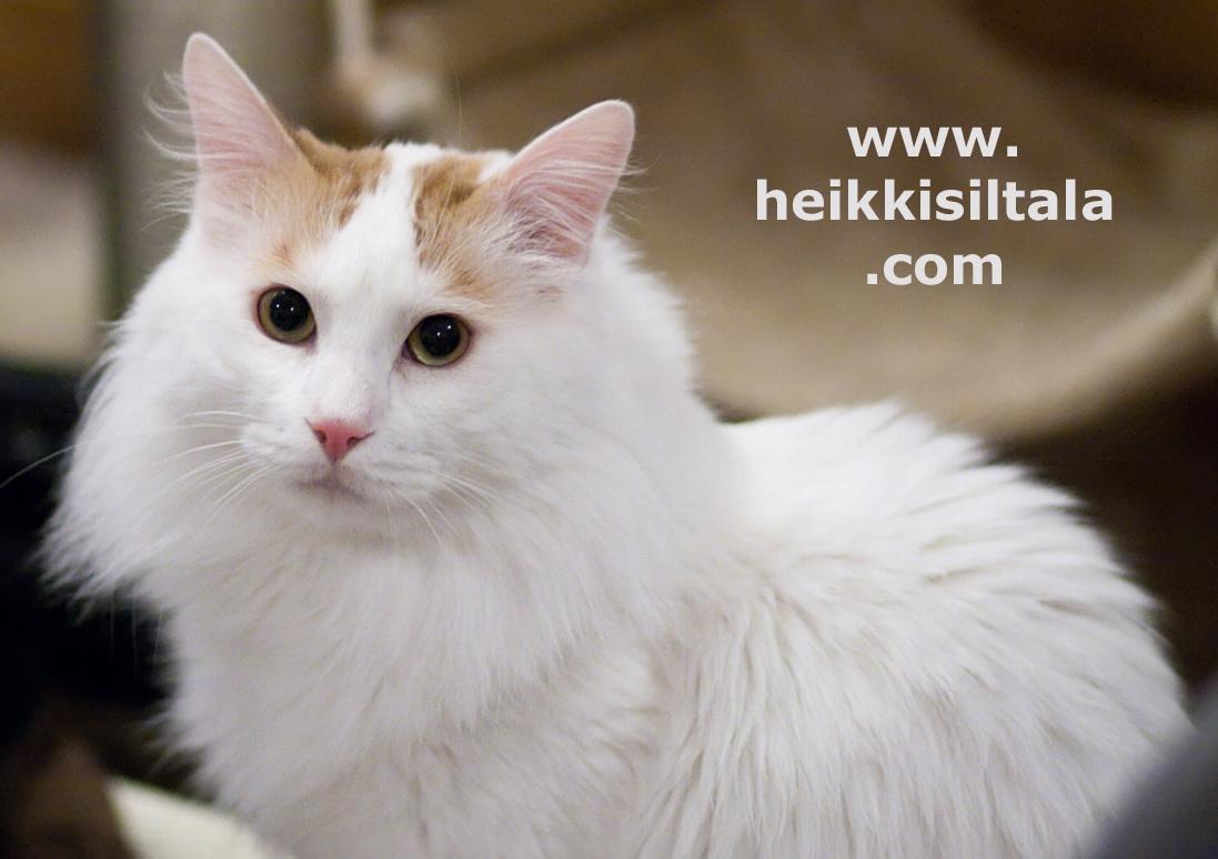 bonus photo GIP,EC Ipekkedinin Birinci Bebek (Mikke) [TUV d 62], photo 123188, 2009-04-04