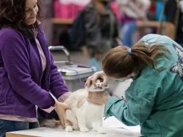 kuva 125007 . eläinlääkärin tarkastus . 25.4.2009