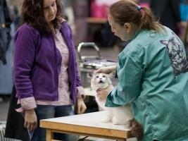 kuva 125008 . eläinlääkärin tarkastus . 25.4.2009