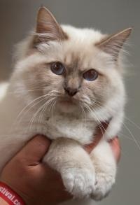 kuva 128065 . Rotcat Benny [SBI c 21] . 2.8.2009