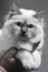 kuva 128066 . Rotcat Benny [SBI c 21] . 2.8.2009