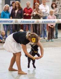 photo 131091 . dog dance . 2009-09-13