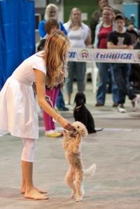 photo 131092 . dog dance . 2009-09-13