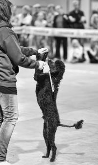 photo 131100 . dog dance . 2009-09-13