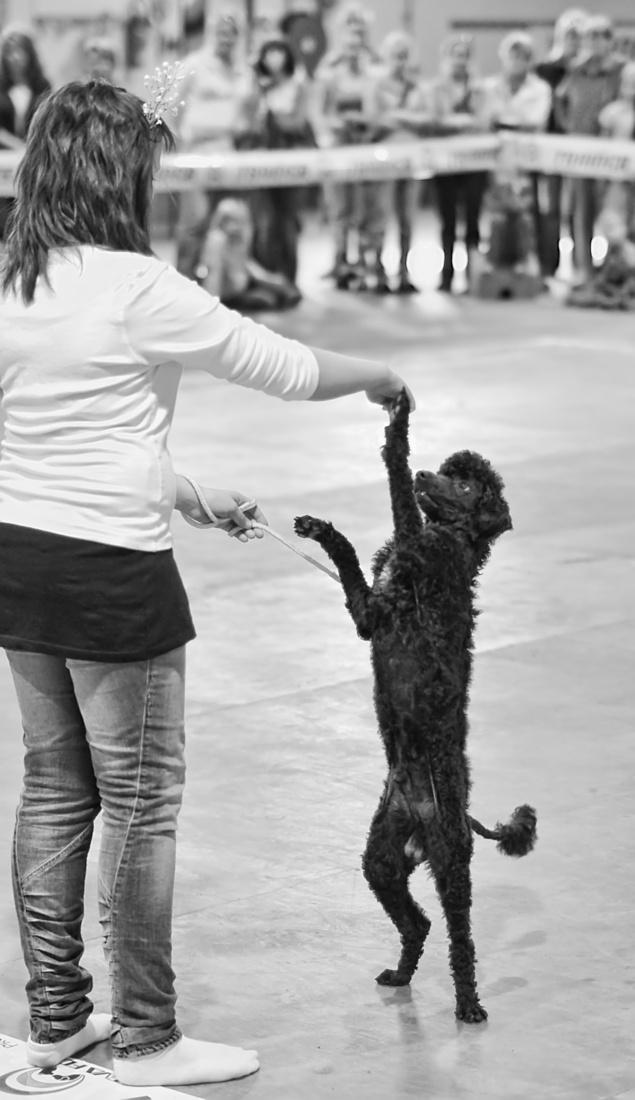 dog dance, photo 131103, 2009-09-13