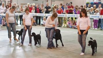photo 131104 . dog dance . 2009-09-13