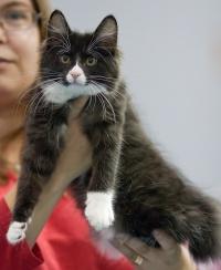 photo 132030 . RGJ Cat's Mafia [KBL n 09] . 2009-09-26