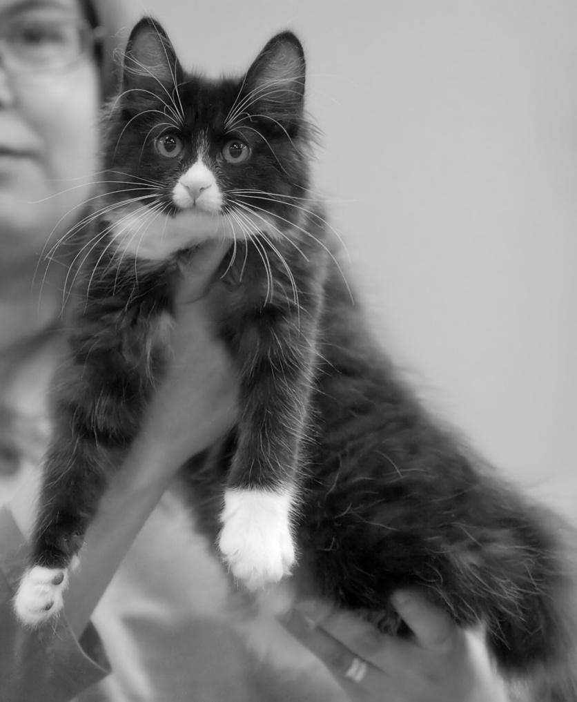 RGJ Cat's Mafia [KBL n 09], photo 132031, 2009-09-26