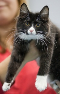photo 132032 . RGJ Cat's Mafia [KBL n 09] . 2009-09-26
