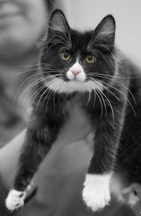 photo 132033 . RGJ Cat's Mafia [KBL n 09] . 2009-09-26