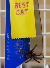 kuva 133003 . näyttelyn koristeita . 4.10.2009