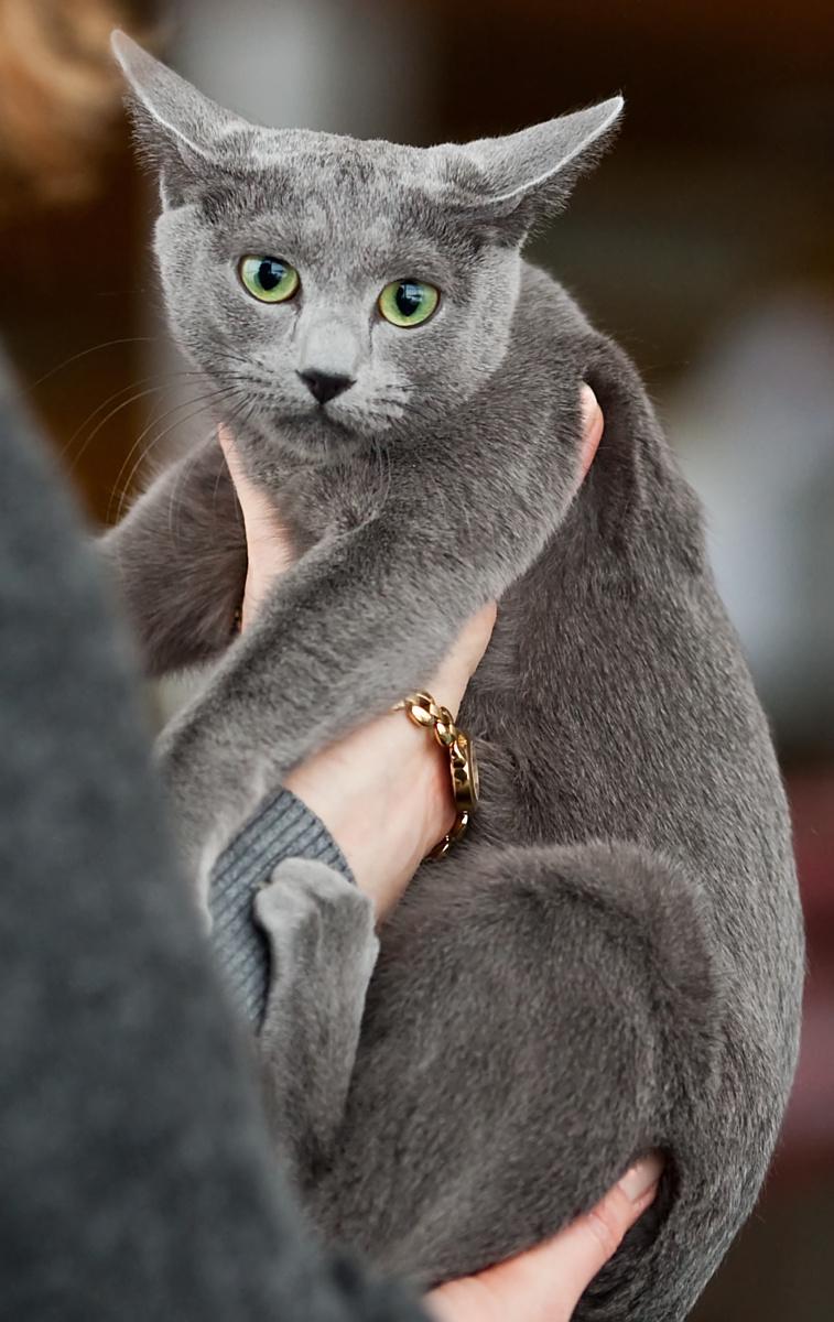 Andinan Celestina (Siiri) [RUS], kuva 135134, 14.11.2009