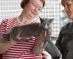 photo 135157 . Katzenhof Gracious Gem (Kerttu) [RUS] . 2009-11-14
