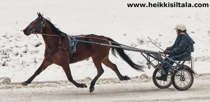 kuva 136156 . Pegasos, lentävä hevonen . 15.11.2009