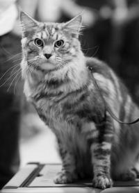 kuva 137012 . Rotcat Cat [MCO ns 22] . 28.11.2009