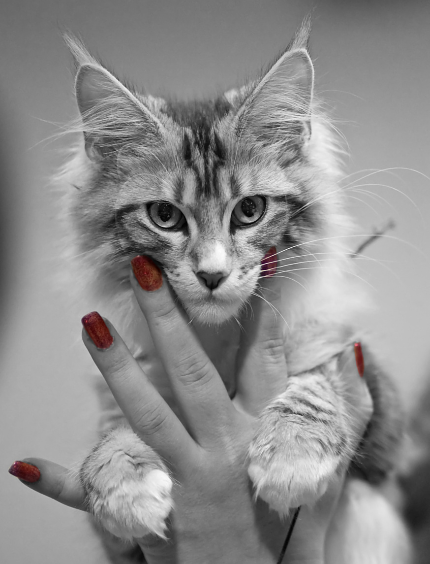 Rotcat Didi [MCO ns 09 22], photo 137032, 2009-11-28